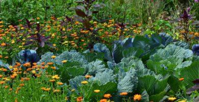 diferencias entre jardín herbal y jardín helechos