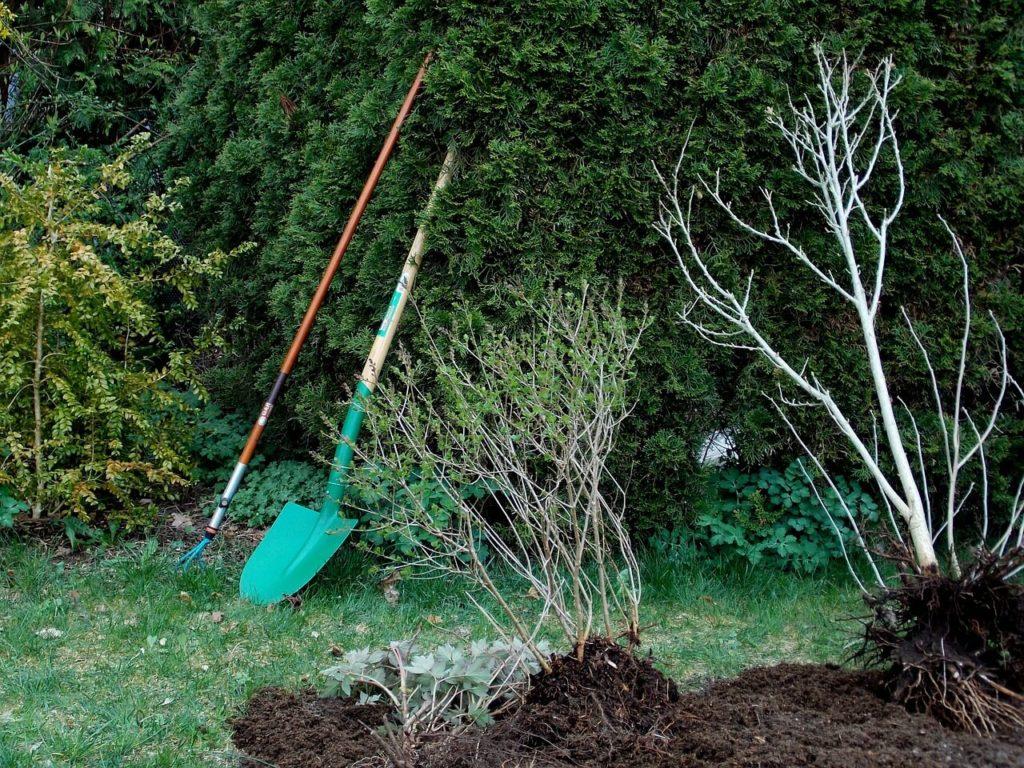 herramientas que no pueden faltar en tu jardin